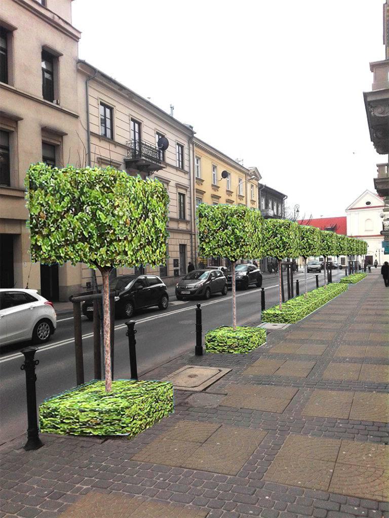 kanciaste drzewa lublin