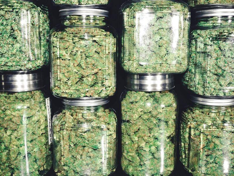 marihuana w słoikach