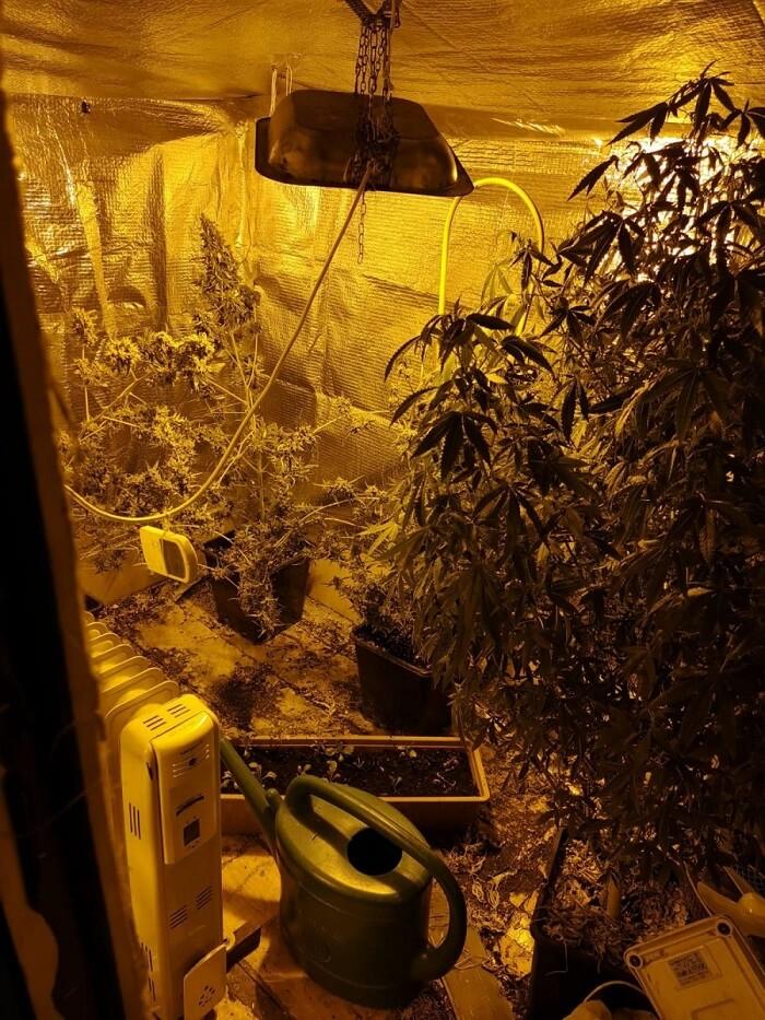 Nielegalna plantacja marihuany na poddaszu | fot. KMP Lublin
