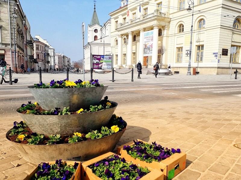 Bratki na Placu Łokietka