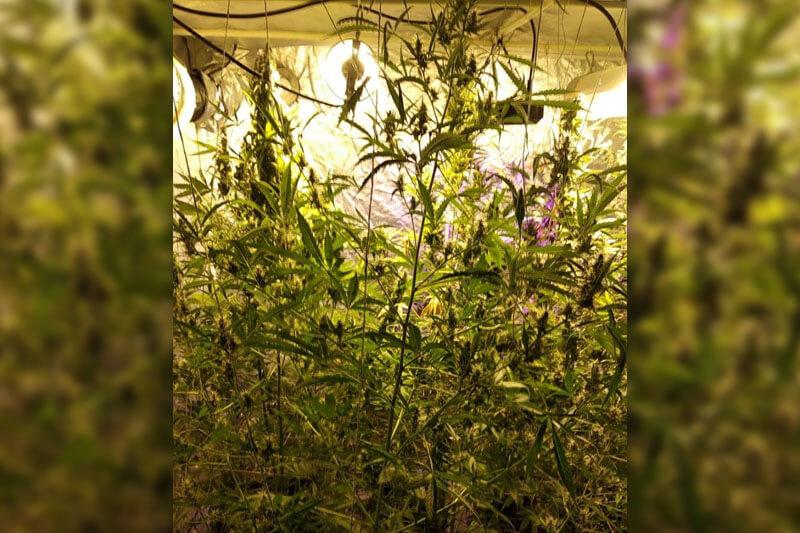Plantacja marihuany ukryta w garażu | fot. KMP Lublin