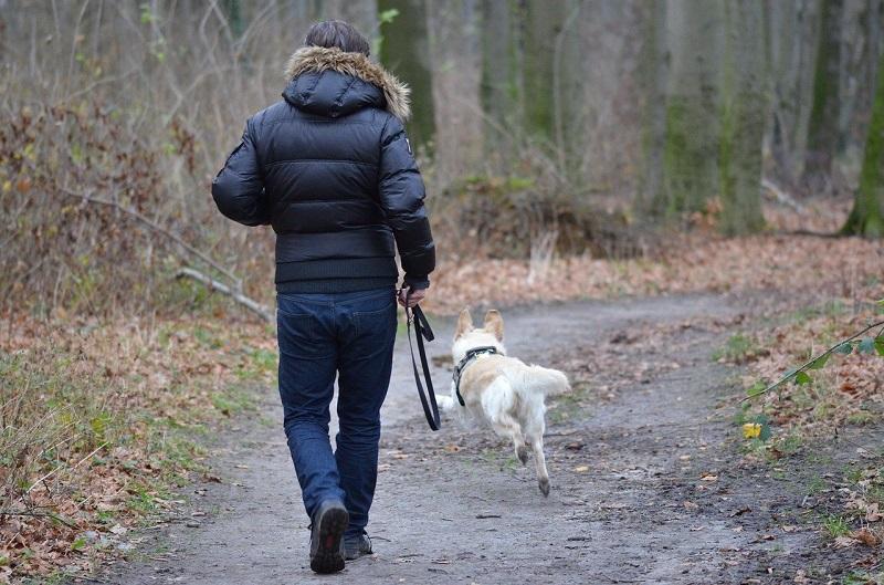pies puszczony bez smyczy na spacerze