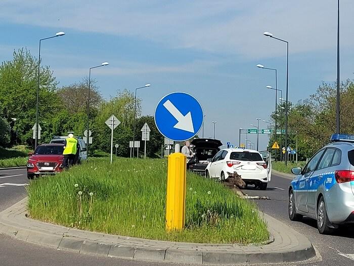 Potrącony łoś na ul. Węglarza w Lublinie