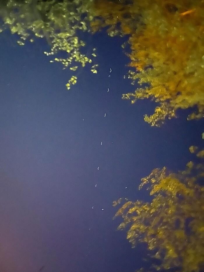 """Dziwny """"sznur"""" świateł na niebie widziany z Lublina"""