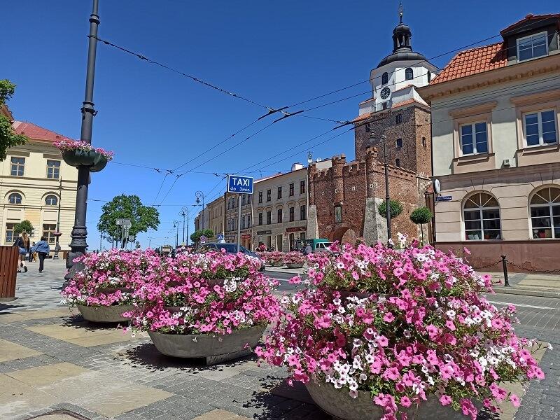 Letnia odsłona kwietnych dekoracji na Placu Łokietka