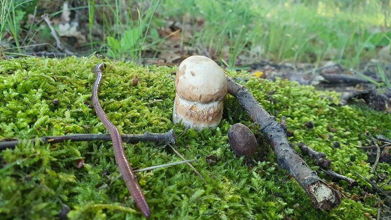 W lasach można znaleźć już borowiki (prawdziwki)