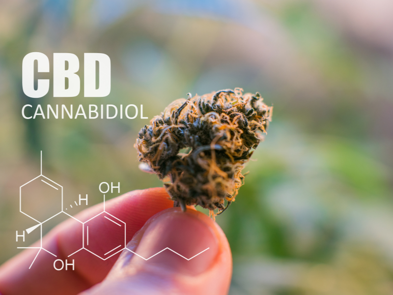 marihuana medyczna cbd
