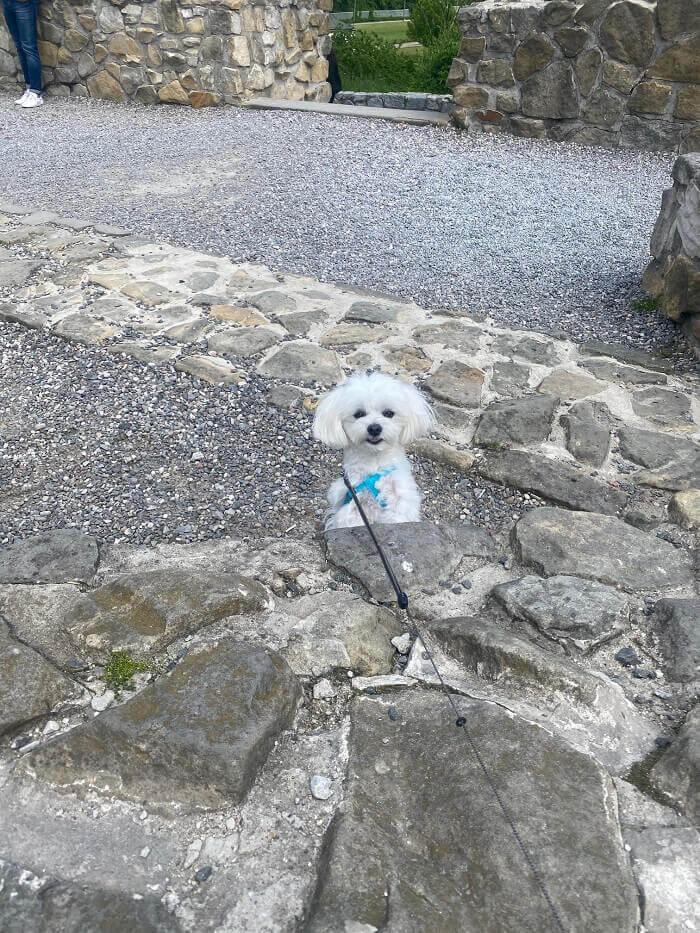 Zdjęcie zagryzionego psa