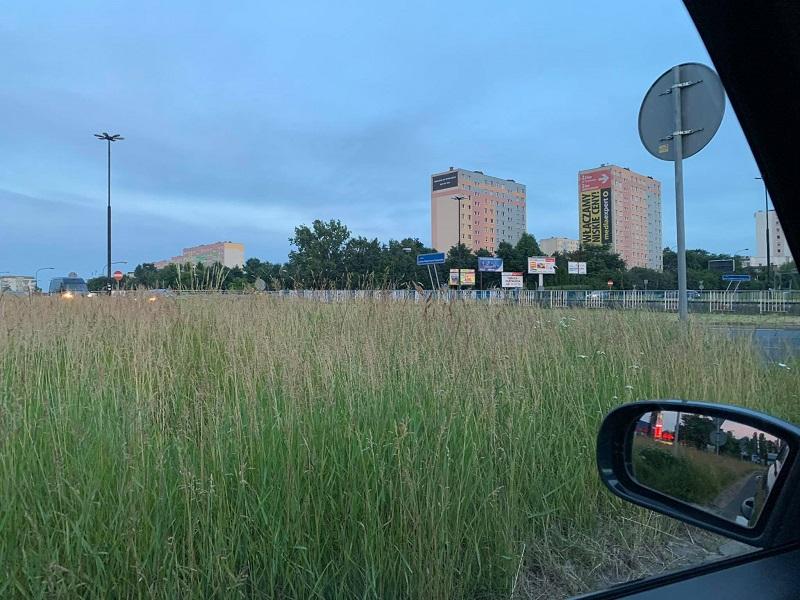 Wysoka trawa ogranicza widoczność przed wjazdem na rondo przy Makro