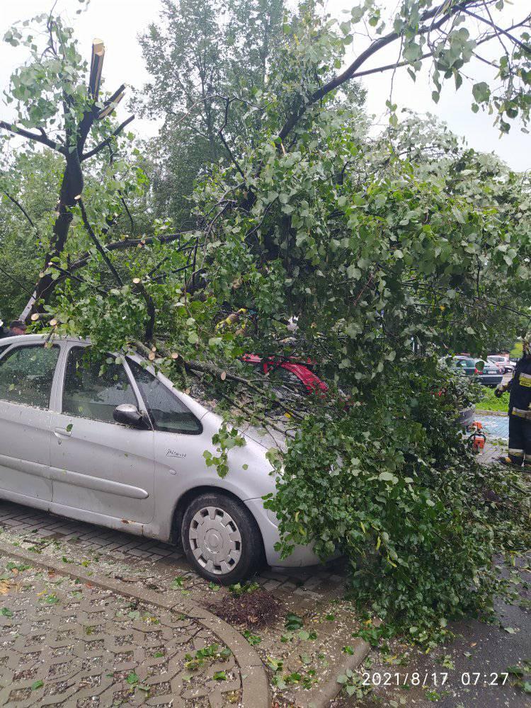 Drzewo upadło na zaparkowanego citroena na ul. Bursztynowej