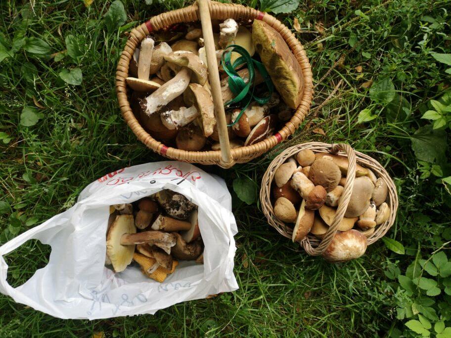 Lasy pełne grzybów