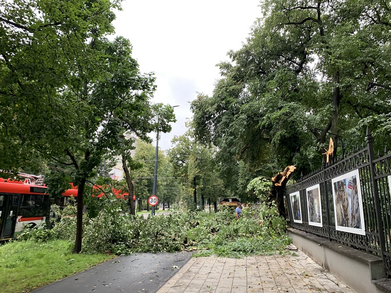 Konary drzew uszkodziły ogrodzenie Ogrodu Saskiego