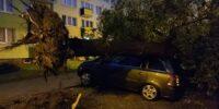 Opel przygnieciony przez drzewo na ul. Braci Wieniawskich