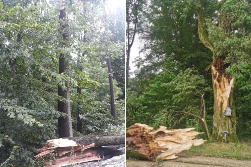 Połamane drzewa w lasach Stary Gaj i Dębówk