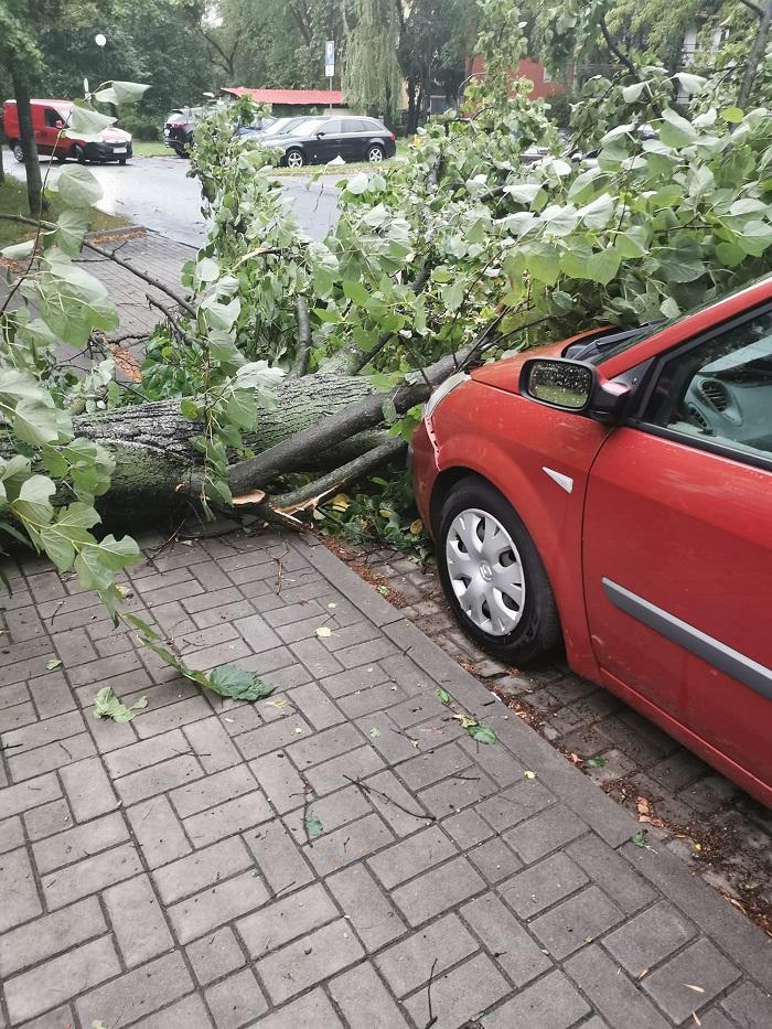 Powalone drzewo uszkodziło zaparkowane auto na ul. Radości