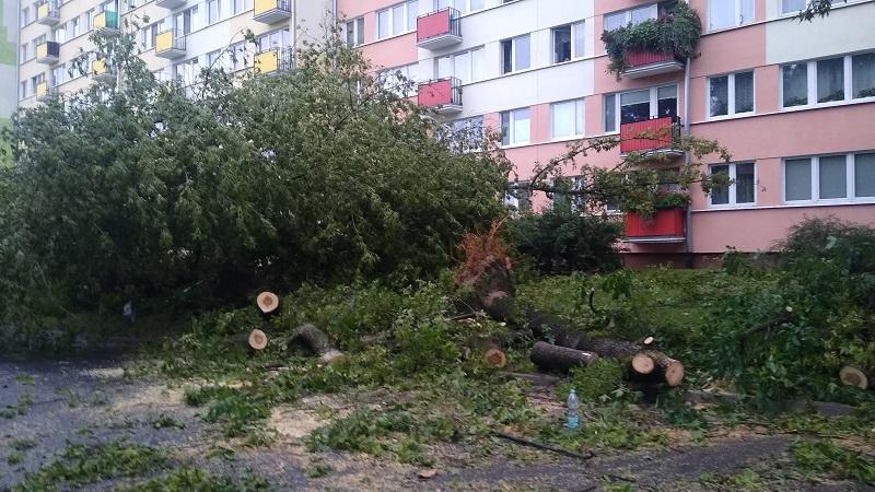 Powalone drzewa na ul. Braci Wieniawskich