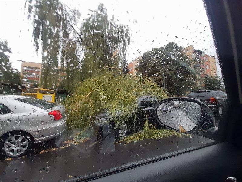 Powalone drzewo na zaparkowane przy ulicy auta