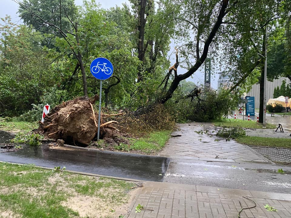 Powalone drzewo na CSK