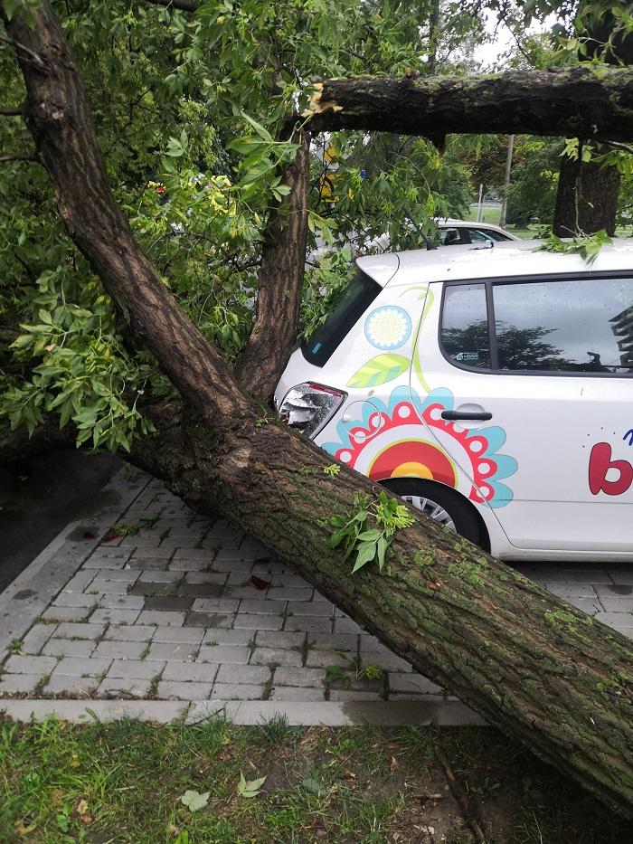 Powalone drzewo uszkodziło skodę na ul. Paganiniego