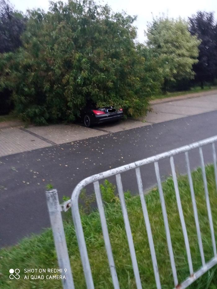 Mercedes przygnieciony przez powalone drzewo na Sławinie