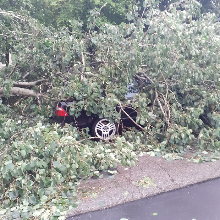 Samochód pod drzewem na ul. Szmaragdowej