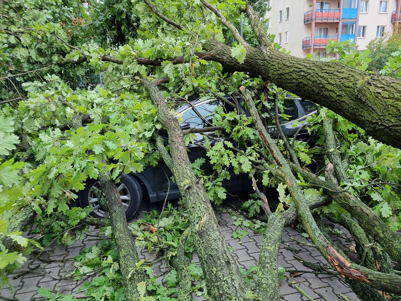 Samochód uszkodzony przez powalone drzewo na ul. Agatowej