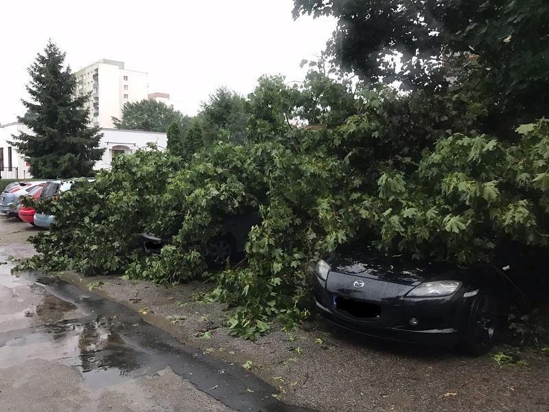 Powalone drzewa przygniotły samochody na ul. Paderewskiego na Czechowie