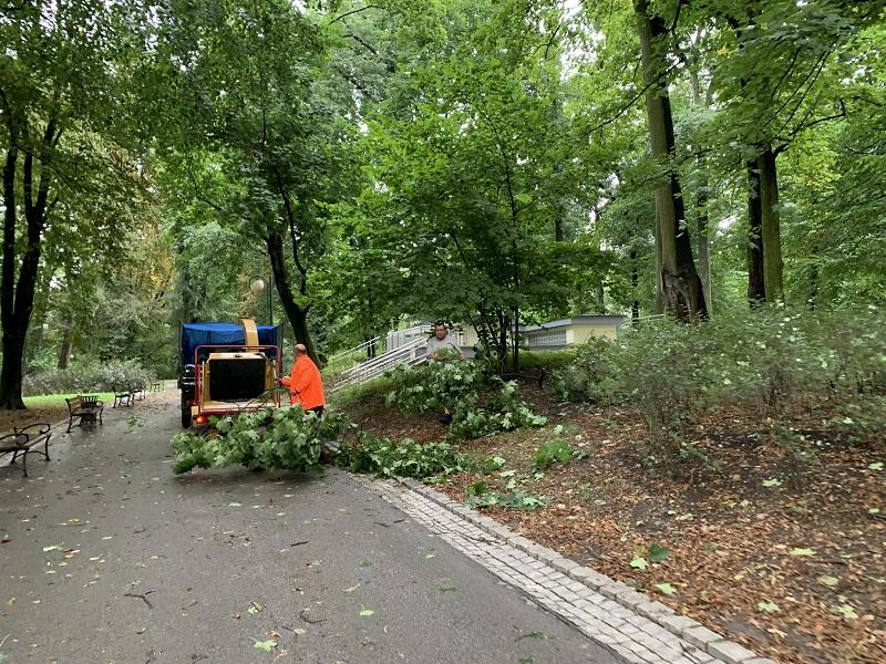 Sprzątanie Ogrodu Saskiego z gałęzi i konarów