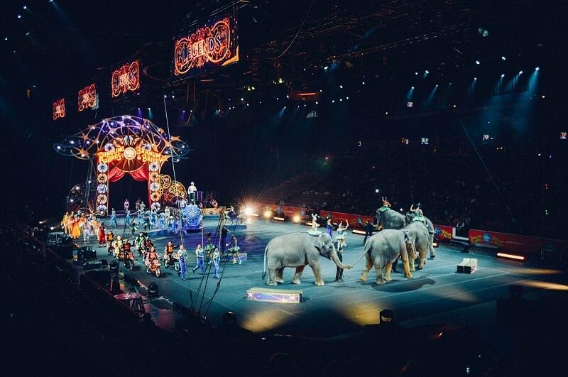 cyrk ze zwierzętami