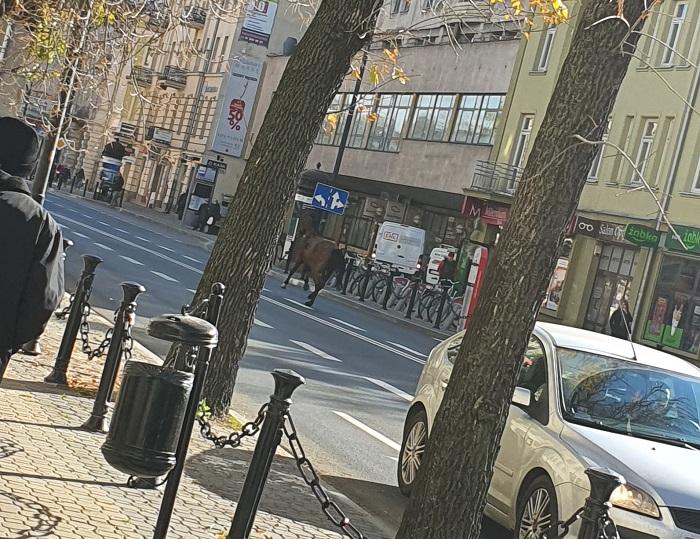 Galopujący koń po Krakowskim Przedmieściu w Lublinie