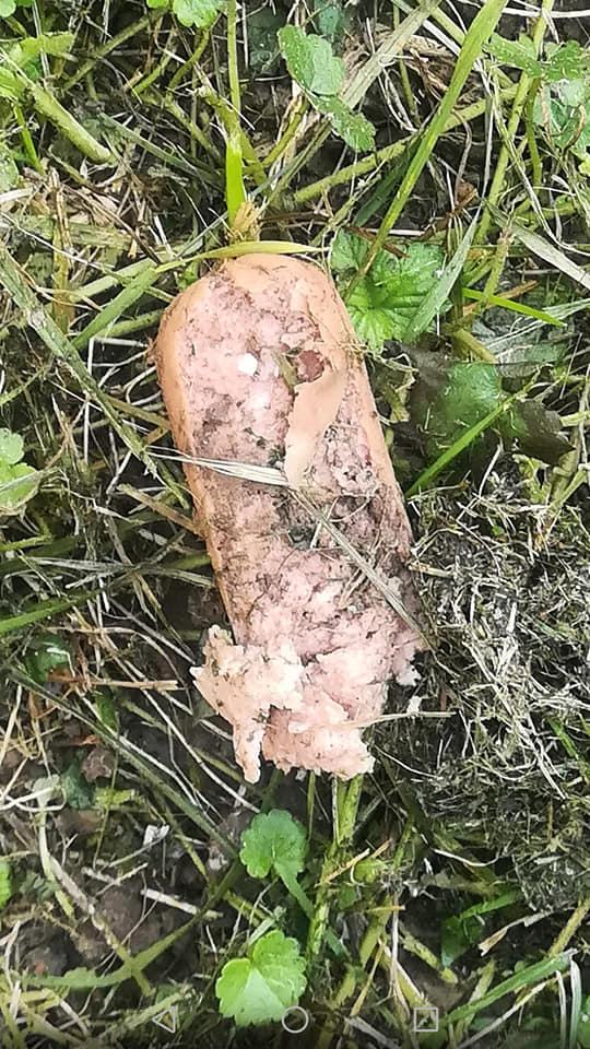 Parówka z trucizną na trawniku