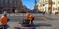 Jesienna wymiana kwiatów w donicach w centrum Lublina